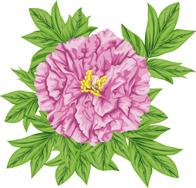 12.30*ボタンの花*76-108.jpg