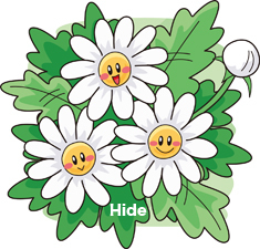 18.12.8*菊の花3.jpg