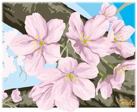 19.2.24*桜咲く*71-186.4.jpg