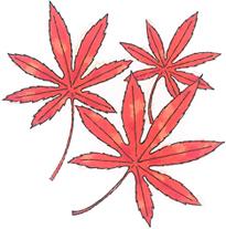2018.12.12*紅葉*70-124.3.jpg