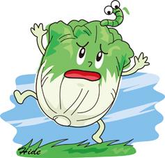 4.21*白菜と虫*60-156.9.jpg