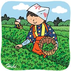 4.21*茶摘み*85-165.9.jpg