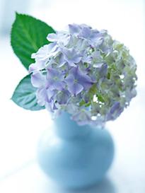6.8*紫陽花*60-164.jpg