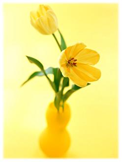 6.8*黄色い花*66-239..jpg