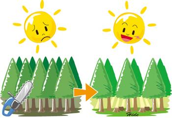 7.20*森林の間伐を。50-300.jpg