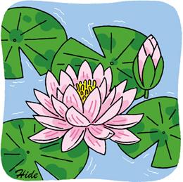 8.3*ハスの花*94-197.3.jpg