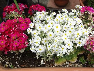 なんの花*37-234.jpg