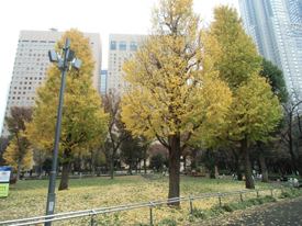 公園-1*4.3-166.0.jpg