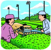 現在の茶摘み*70-150.8.jpg