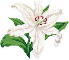 百合の花*68-143.7.jpg