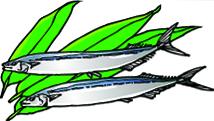 秋刀魚イラスト72-101.1.jpg