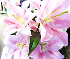 美しく咲いた百合の花*57-149.3.jpg
