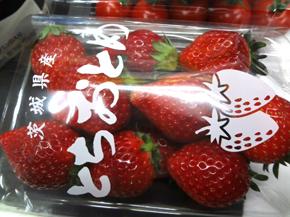 茨城県産とちおとめ*22-184.4.jpg